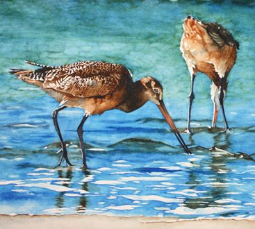 Godwits. Watercolor by Mary Blake