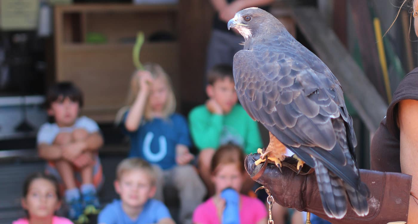 A Wildlife Ambassador presentation. Photo by Tory Russell