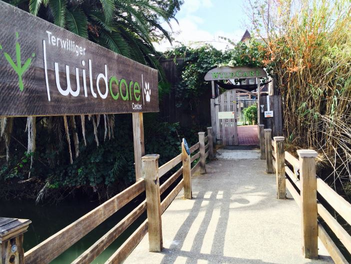 The entrance to WildCare's courtyard. Photo by Tory Russell