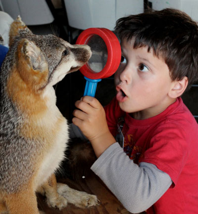 Meeting a taxidermy fox. Photo by Tory Russell