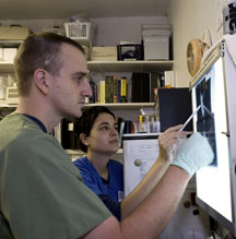 Interns look at an x-ray. Photo by Trish Carney