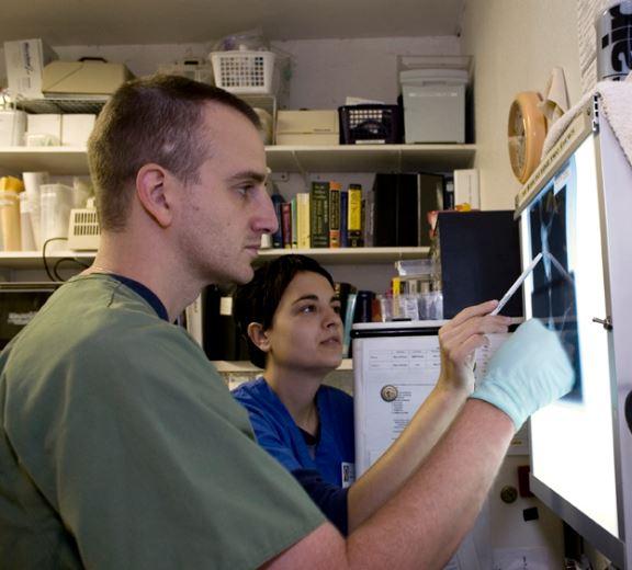 Examining a radiograph. Photo by Trish Carney trishcarney.com
