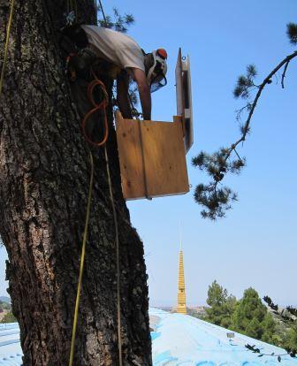 Arborist Jim Cairnes hangs an owl box. Photo by Alison Hermance