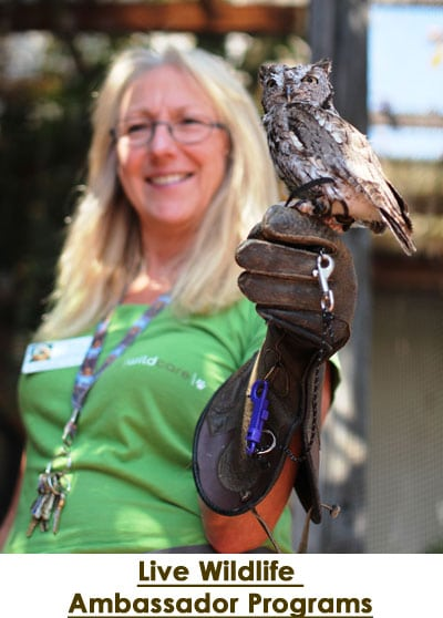 Live Wildlife Ambassador Program. Photo by Tory Russell