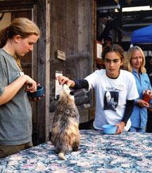 Teen volunteers working with a Wildlife Ambassador opossum.