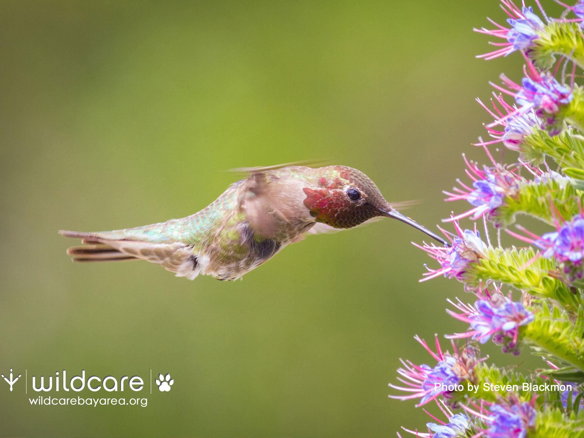 Hummingbird. Photo by Steven Blackmon