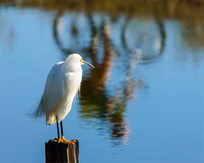 Egret and Bicyclist. Photo by Mary Sheft