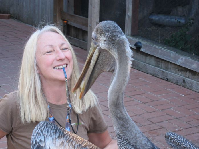 Training the pelican. Photo by Alison Hermance