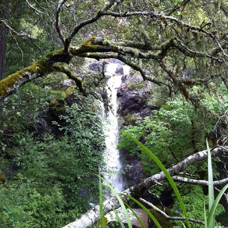 Waterfall. Photo by Alison Hermance
