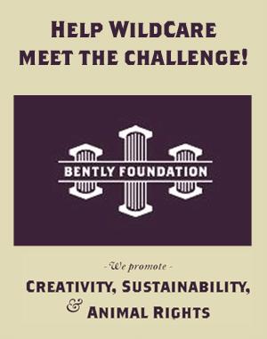 Bently Foundation logo