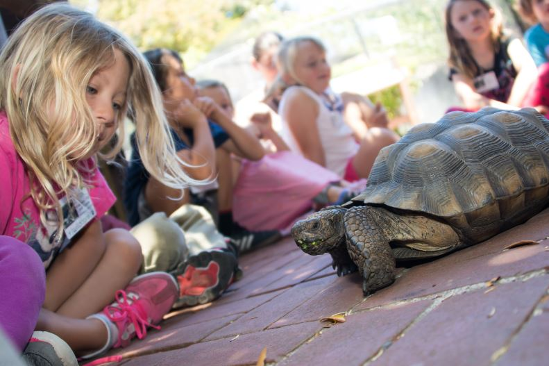 Mojave the Desert Tortoise. Photo by Tory Russell