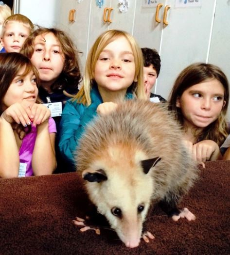 Meeting the opossum. Photo by Tory Russell