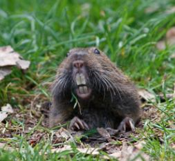 Gopher. Photo by Lisa Woldin