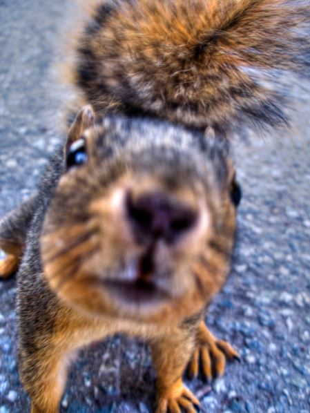 Curious squirrel. Photo by Stephen Hollingsworth