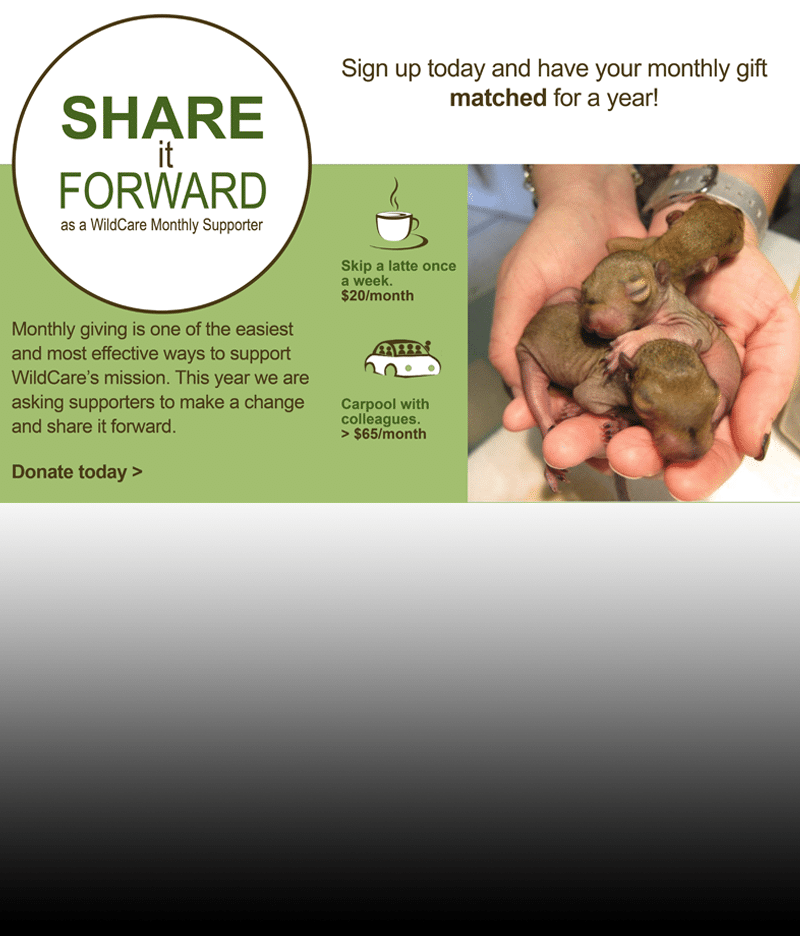Share it forward as a WildCare Monthly Donor!