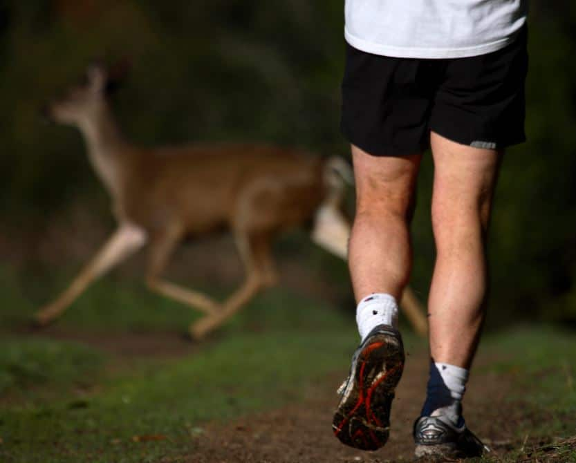 Runner and deer. Photo by Trish Carney trishcarney.com