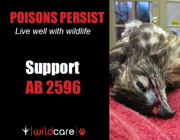 Poster in support of AB 2596. Photo by Alison Hermance