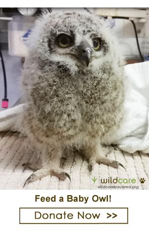 Feed a baby owl! Photo by Melanie Piazza