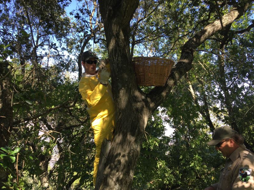 Setting up the basket. Photo by Maggie Rufo