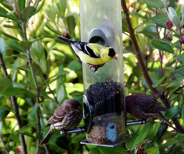Birds on feeder by Eric Tymstra