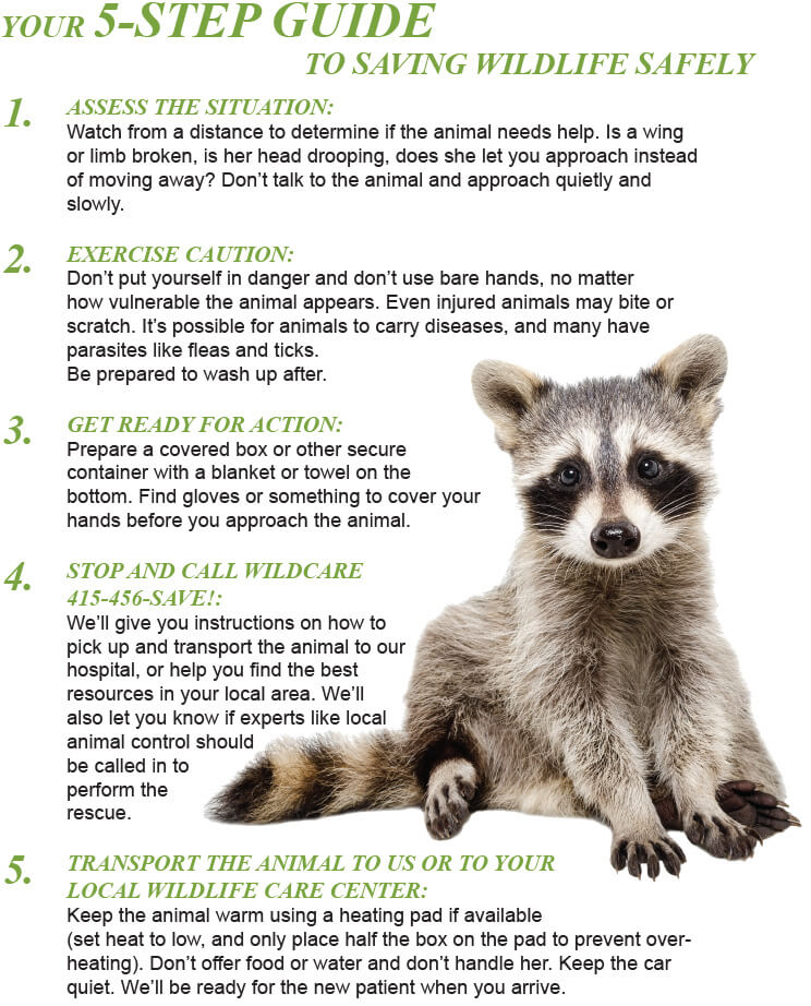 5 Step Guide To Saving Wildlife Safely 01