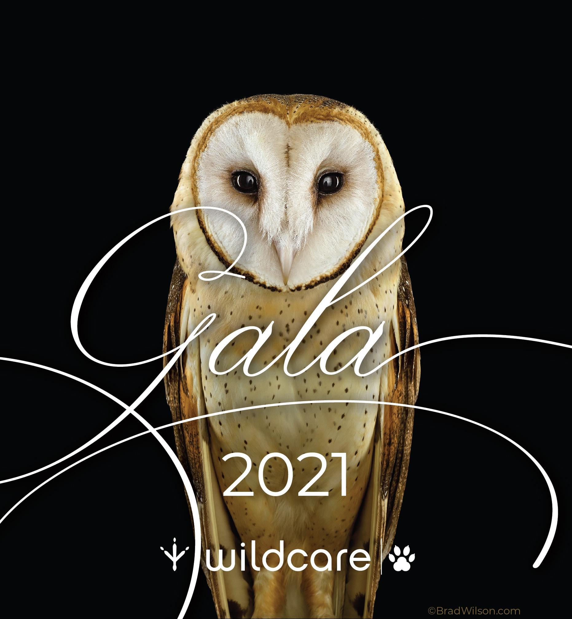 Gala Owl 2021 V2 01 01